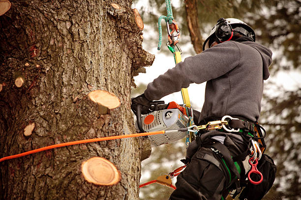 Hiring Professional Tree Services: What You Should Know?
